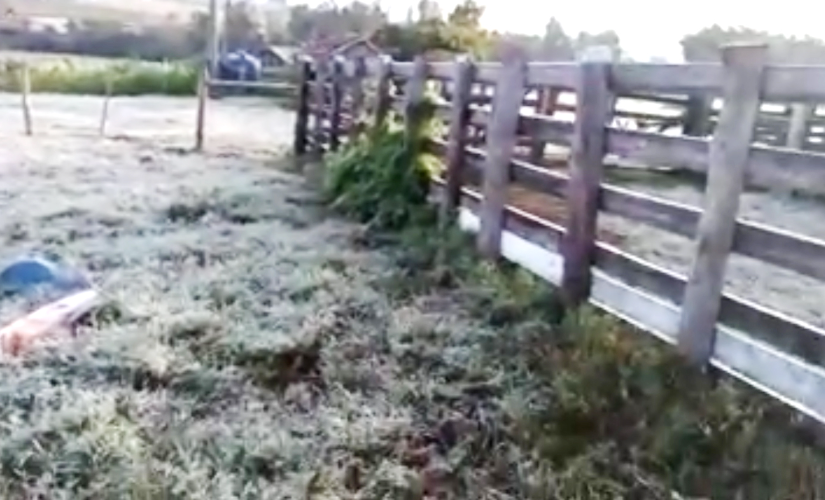 Geadas atingiram lavouras em Santa Cruz, e risco persiste sob frio intenso