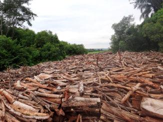 Área já desmatada em Águas de Santa Bárbara  para a construção de uma PCH no rio Pardo