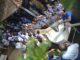 Estudantes acompanham a soltura dos peixes no rio Pardo, na quarta-feira, 22