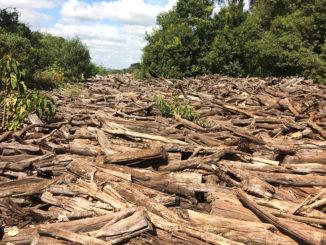 Desmatamento já é igual a 80 campos de futebol