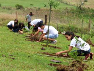 Estudantes trabalham no plantio de mudas nas margens de pequenos ribeirões