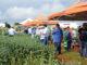TÉCNICAS — Produtores de Santa Cruz e região acompanharam explicações técnicas sobre tecnologia e sementes