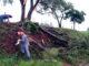 MUITO TRABALHO — Bombeiros trabalhavam para retirar árvores que caíram na beira de rodovia vicinal